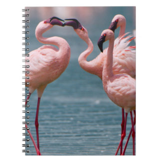 Two Male Lesser Flamingos (Phoenicopterus Minor) Spiral Notebook