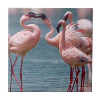 Two Male Lesser Flamingos (Phoenicopterus Minor) Tile