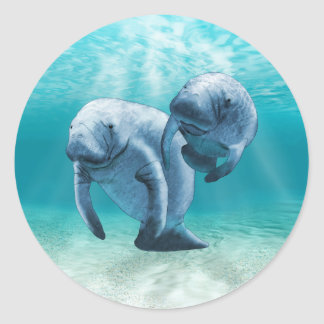 Two Manatees Swimming Classic Round Sticker