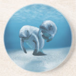 Two Manatees Swimming Drink Coasters