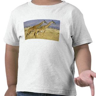 Two Masai Giraffes Giraffa camelopardalis T Shirts