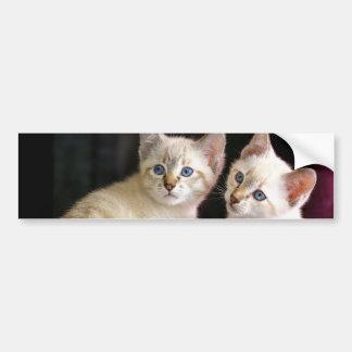 Two Mekong Bobtail Tabby Point Kittens Car Bumper Sticker