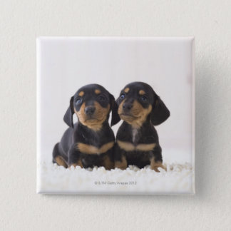 Two Mini Dachshund Sitting 15 Cm Square Badge