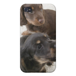 Two Miniature Dachshunds, Studio Shot Case For iPhone 4