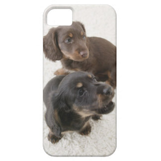 Two Miniature Dachshunds, Studio Shot iPhone 5 Cases