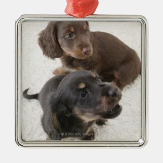 Two Miniature Dachshunds, Studio Shot Silver-Colored Square Decoration