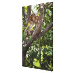 Two Monkeys In A Tree Canvas Print