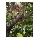 Two Monkeys In A Tree Postcard