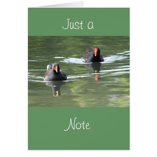 Two Moorhens Cards