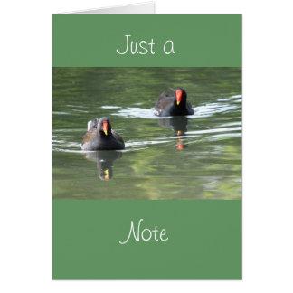 Two Moorhens Greeting Card