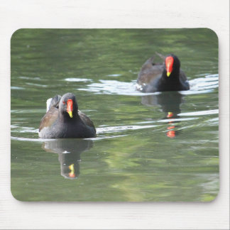 Two Moorhens Mouse Mat
