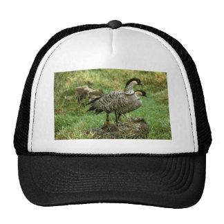 Two Nene Geese (Hawaiian Species) Hat