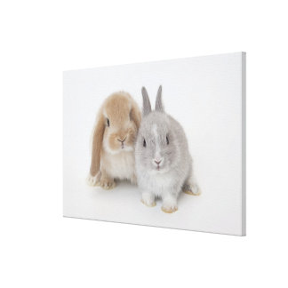 Two Netherland Dwarf and Holland Lop bunnies Canvas Print