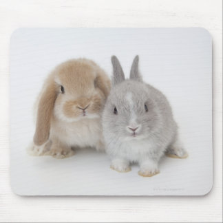 Two Netherland Dwarf and Holland Lop bunnies Mouse Mat