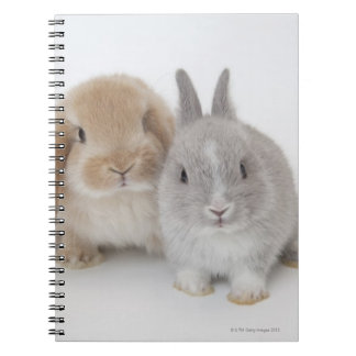 Two Netherland Dwarf and Holland Lop bunnies Notebooks