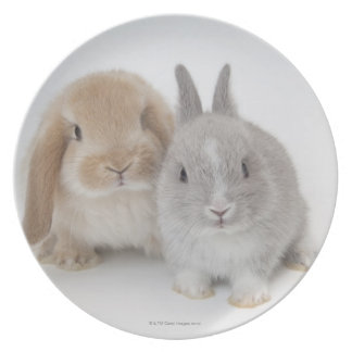 Two Netherland Dwarf and Holland Lop bunnies Party Plate