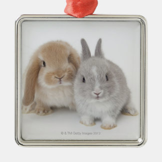 Two Netherland Dwarf and Holland Lop bunnies Silver-Colored Square Decoration