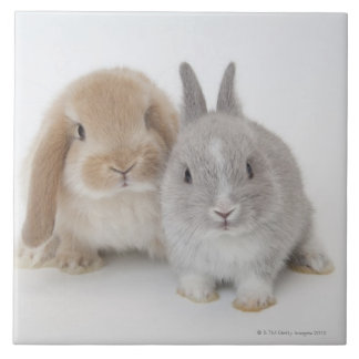 Two Netherland Dwarf and Holland Lop bunnies Tile