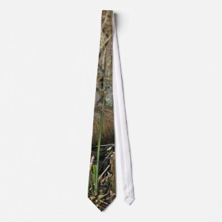 Two nutria tie