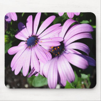 Two Osteospermum Mouse Pad