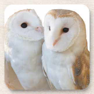 two owls friends coaster