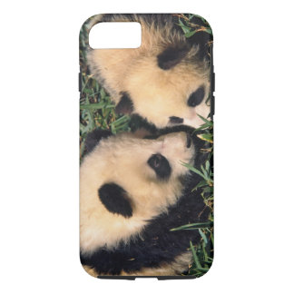 Two panda cubs in the bamboo bush, Wolong, iPhone 8/7 Case