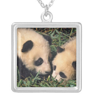 Two panda cubs in the bamboo bush, Wolong, Silver Plated Necklace
