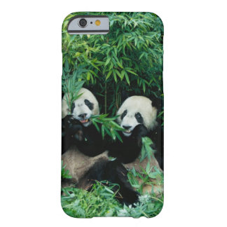 Two pandas eating bamboo together, Wolong, 2 Barely There iPhone 6 Case