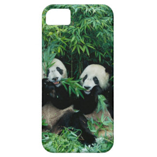 Two pandas eating bamboo together, Wolong, 2 iPhone 5 Covers