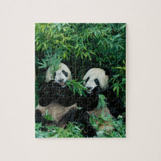 Two pandas eating bamboo together, Wolong, 2 Jigsaw Puzzle