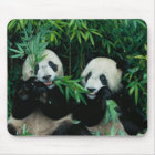 Two pandas eating bamboo together, Wolong, 2 Mouse Mat