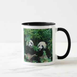 Two pandas eating bamboo together, Wolong, 2 Mug