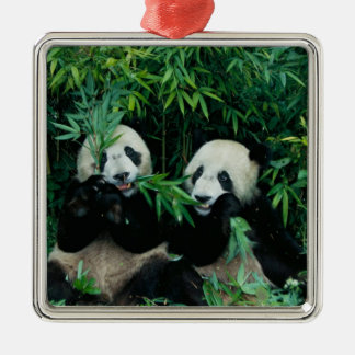 Two pandas eating bamboo together, Wolong, 2 Silver-Colored Square Decoration