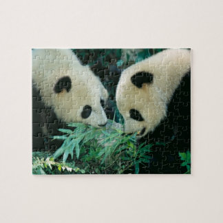 Two pandas eating bamboo together, Wolong, Jigsaw Puzzle