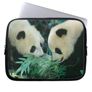Two pandas eating bamboo together, Wolong, Laptop Sleeve