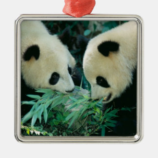Two pandas eating bamboo together, Wolong, Silver-Colored Square Decoration