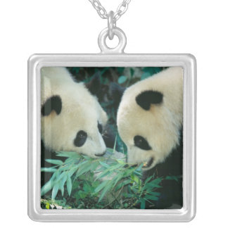Two pandas eating bamboo together, Wolong, Silver Plated Necklace