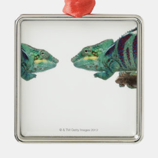 Two Panther Chameleons Nosy Be (Furcifer) Christmas Ornament