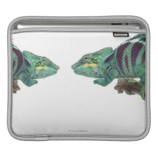 Two Panther Chameleons Nosy Be (Furcifer) iPad Sleeve