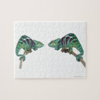 Two Panther Chameleons Nosy Be (Furcifer) Jigsaw Puzzle