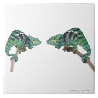 Two Panther Chameleons Nosy Be (Furcifer) Large Square Tile