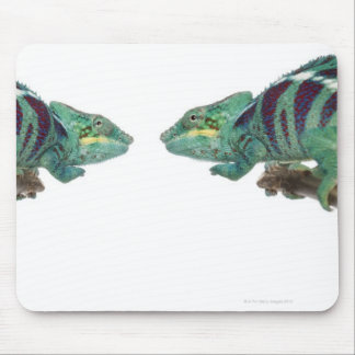 Two Panther Chameleons Nosy Be (Furcifer) Mouse Mat