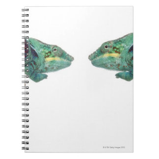 Two Panther Chameleons Nosy Be (Furcifer) Notebooks