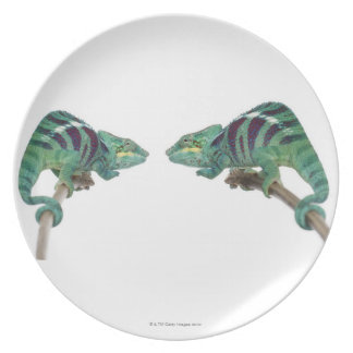 Two Panther Chameleons Nosy Be (Furcifer) Plate