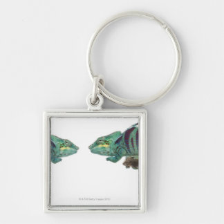Two Panther Chameleons Nosy Be (Furcifer) Silver-Colored Square Key Ring