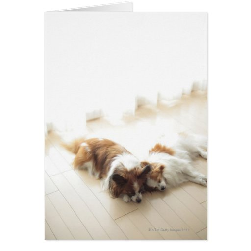 Two Papillion sleeping Greeting Cards