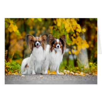 Two Papillon dogs in autumn Card