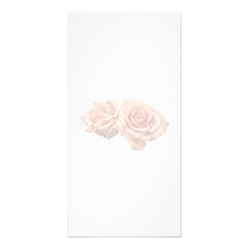 Two Peach Roses Photo Cards