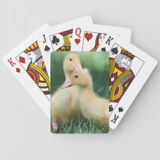 Two Pekin Ducklings Playing Cards