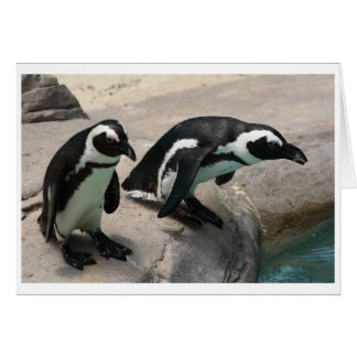 Two Penguins Photo Card